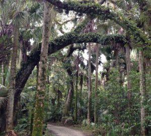 Florida mit Kindern Caloosahatchee Regional Park