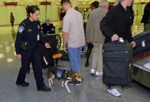 Einreisebestimmungen USA - Hole Dein Gepäck ab und bringe es durch den US Zoll