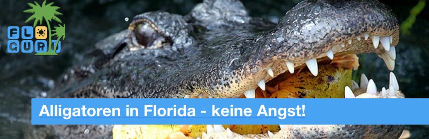 Keine Angst vor Alligatoren in Florida
