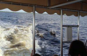 Florida mit Kindern Delfin Tour auf Captiva